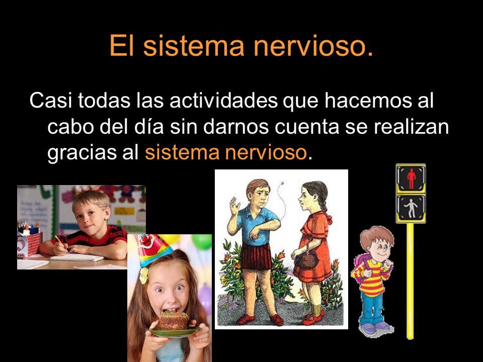 El sistema nervioso.Casi todas las actividades que hacemos al cabo del día sin darnos cuenta se realizan gracias al sistema nervioso.