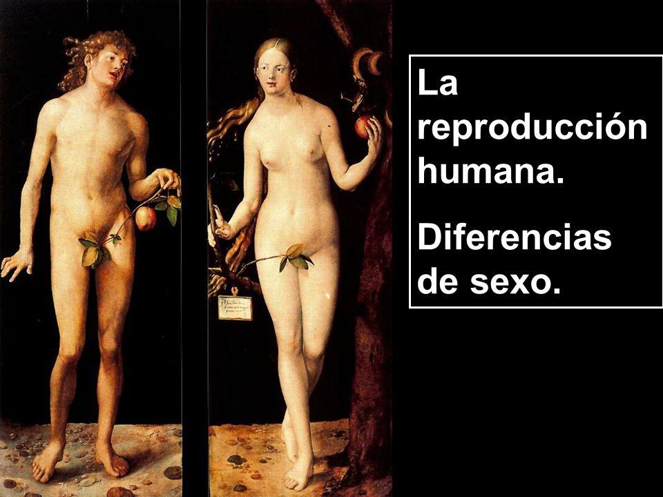 La reproducción humana.