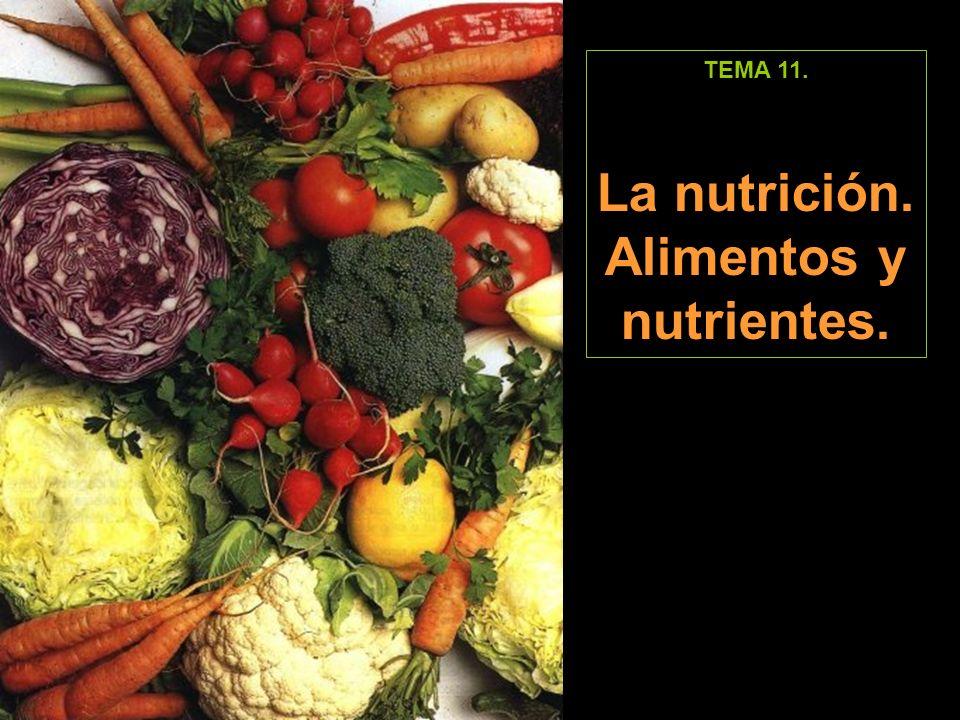 La nutrición. Alimentos y nutrientes.