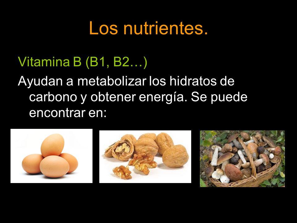 Los nutrientes. Vitamina B (B1, B2…)