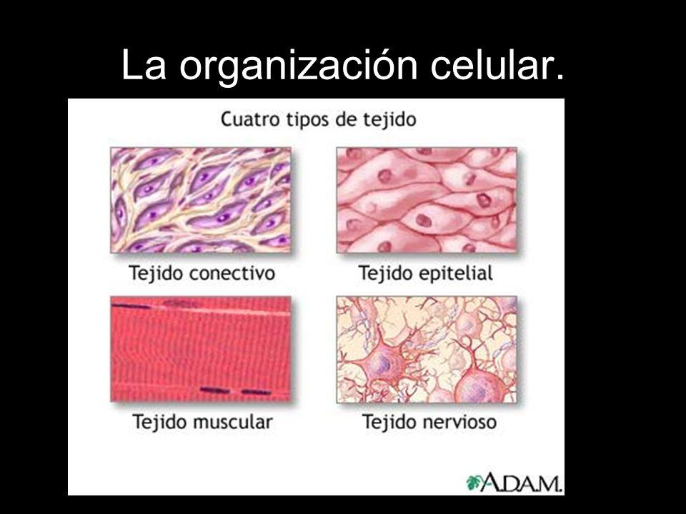 La organización celular.
