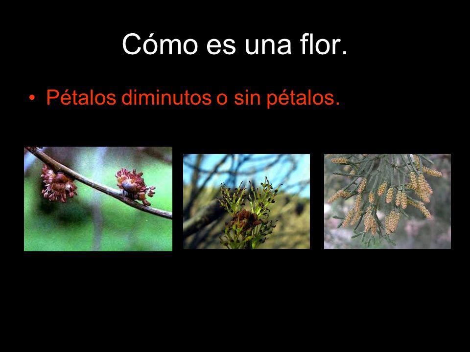 Cómo es una flor. Pétalos diminutos o sin pétalos.
