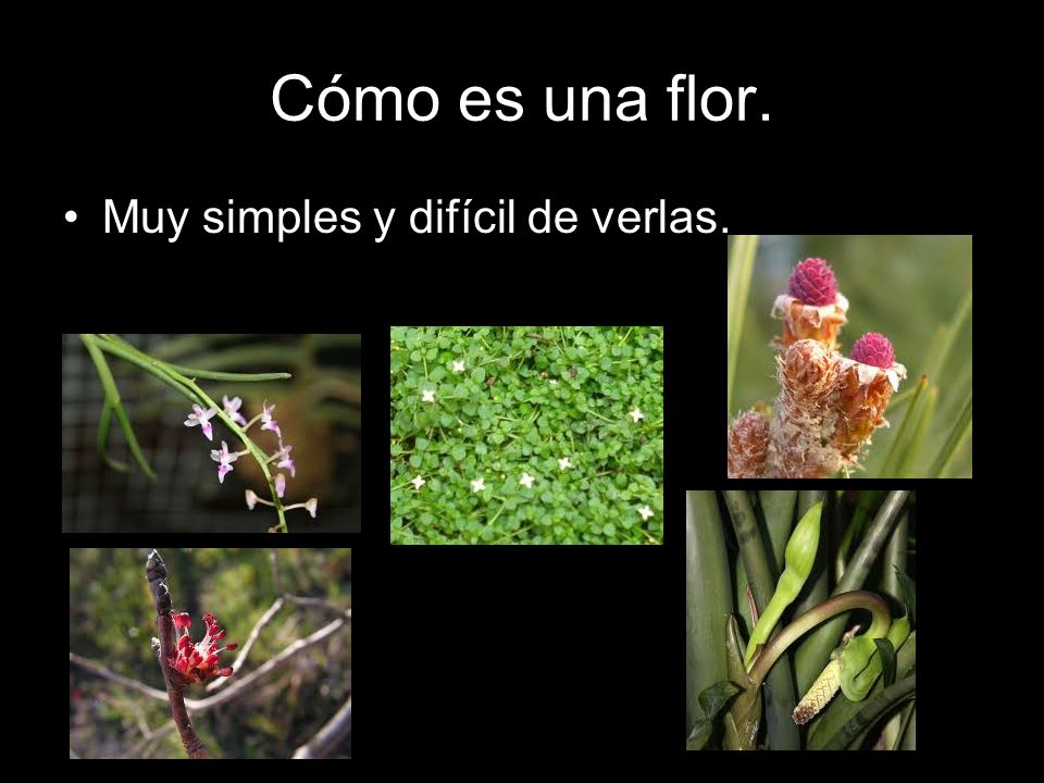 Cómo es una flor. Muy simples y difícil de verlas.