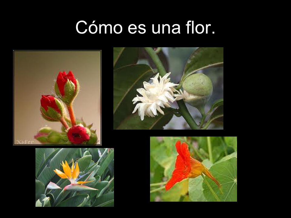 Cómo es una flor.