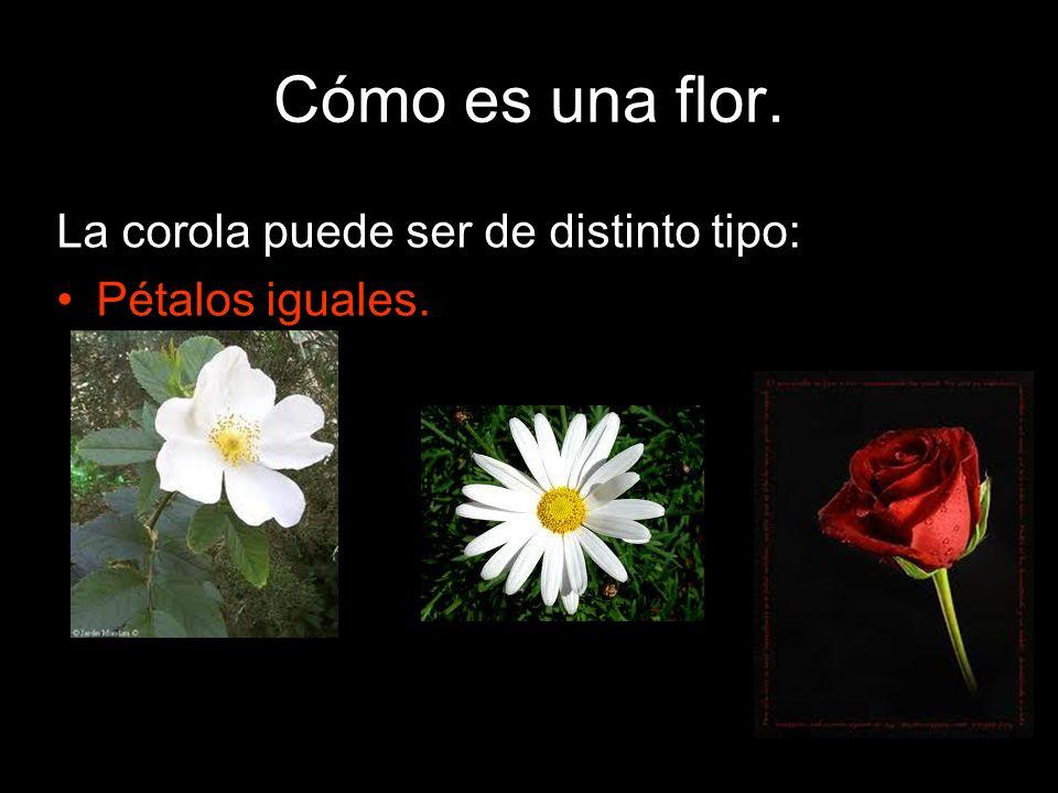 Cómo es una flor. La corola puede ser de distinto tipo: