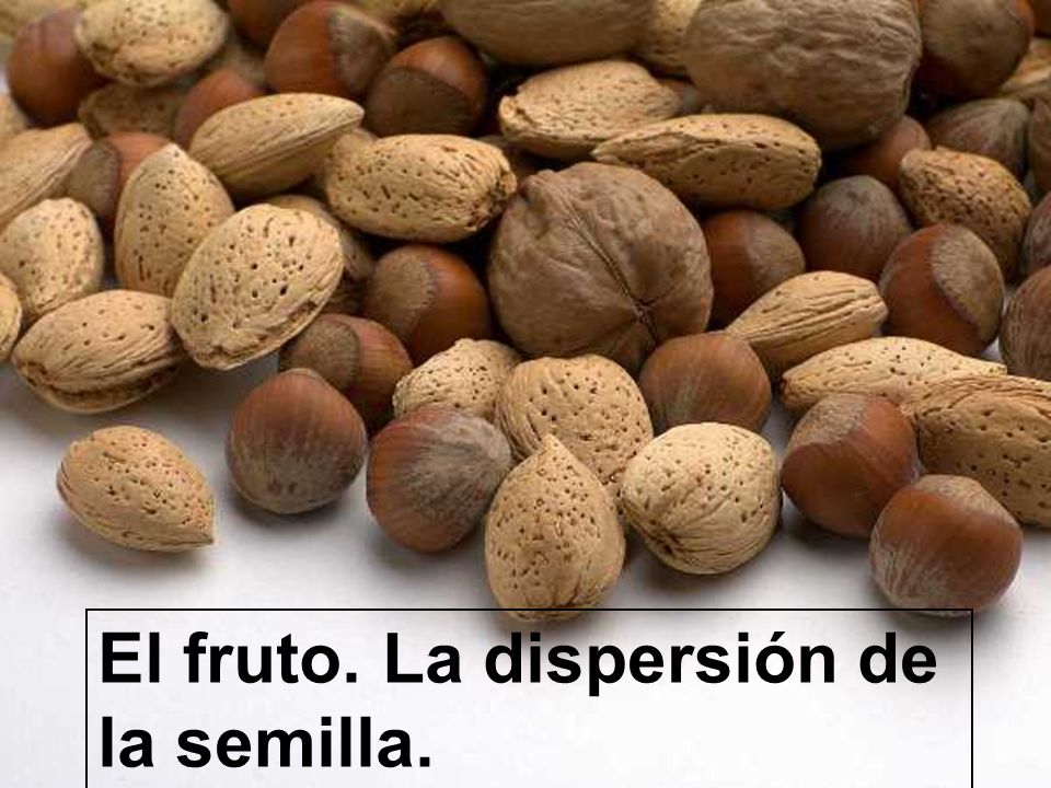 El fruto. La dispersión de la semilla.
