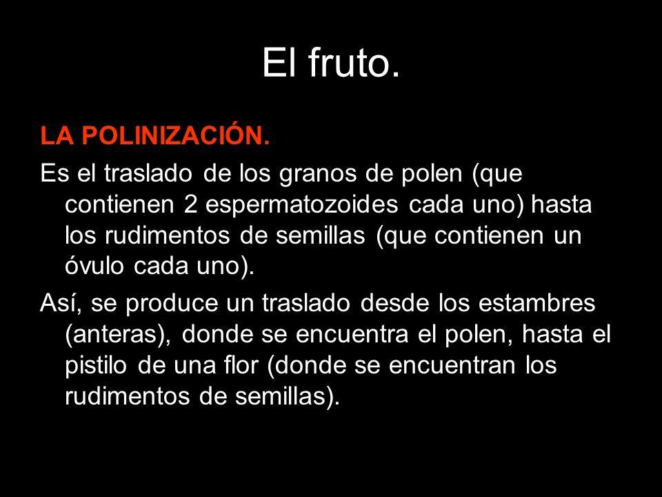 El fruto. LA POLINIZACIÓN.