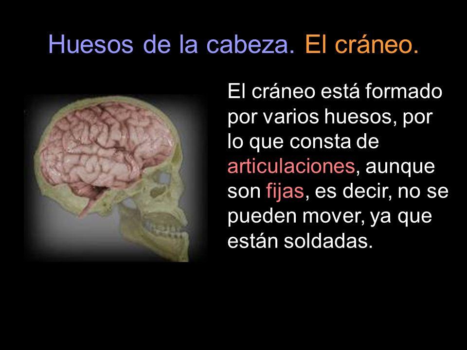 Huesos de la cabeza. El cráneo.