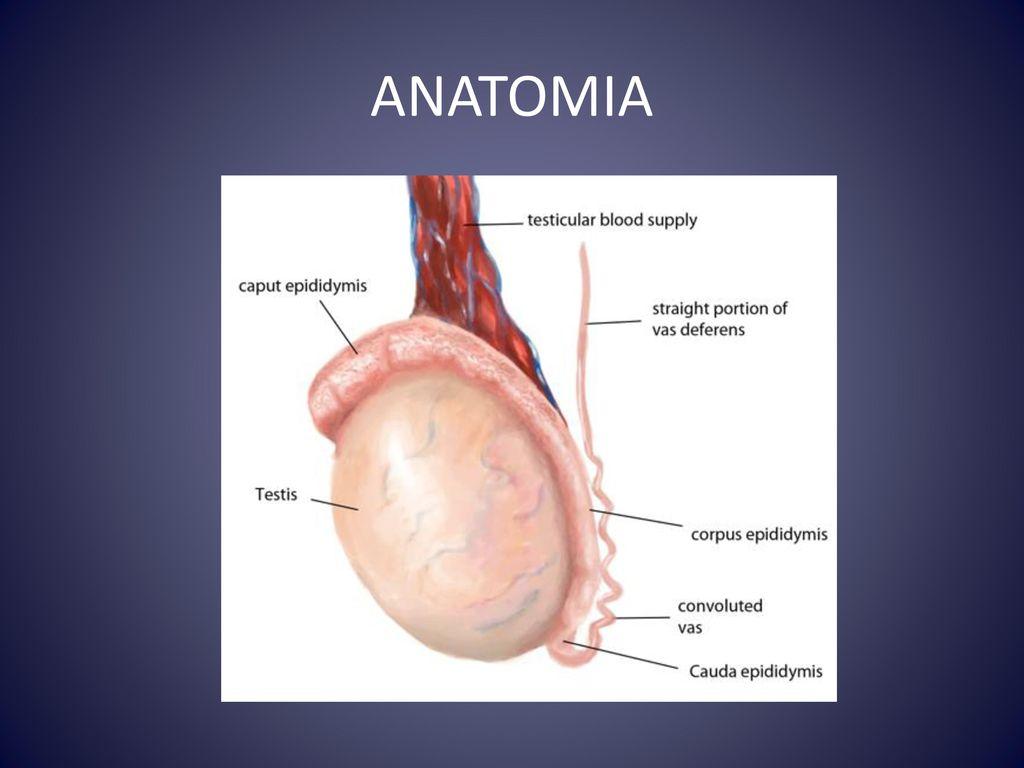 Lujoso Anatomía Del Infierno Izle Colección - Anatomía y Fisiología ...