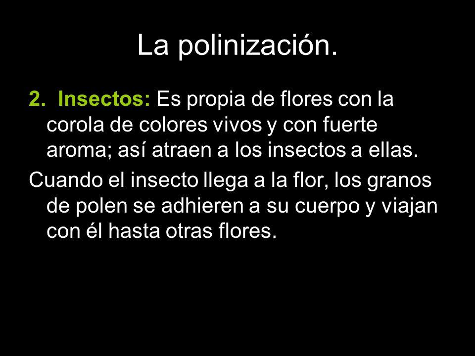 La polinización. 2. Insectos: Es propia de flores con la corola de colores vivos y con fuerte aroma; así atraen a los insectos a ellas.