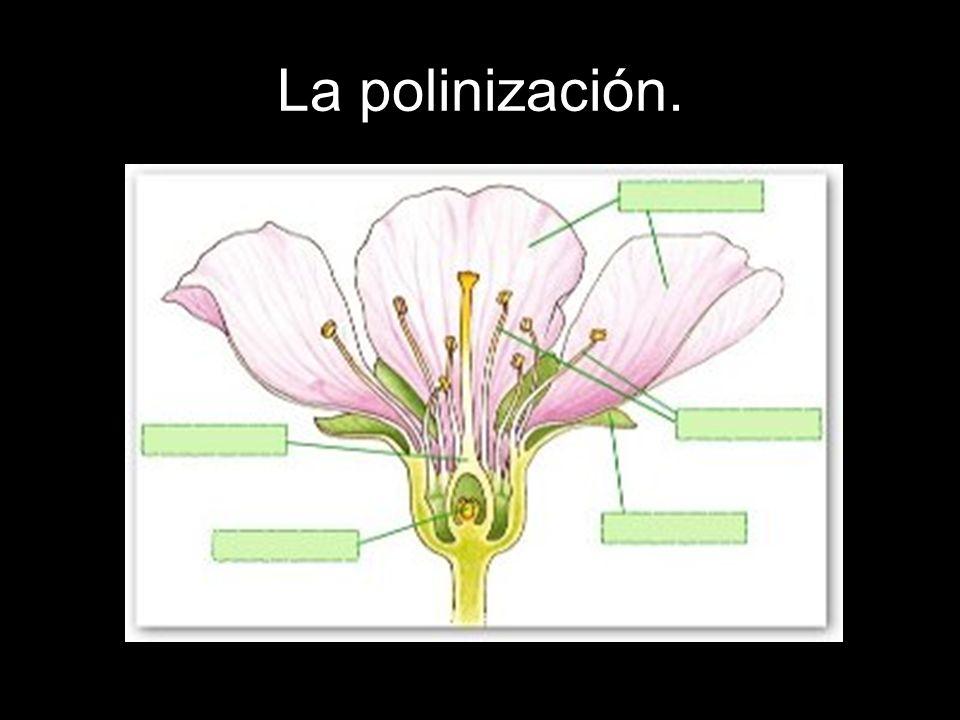 La polinización.