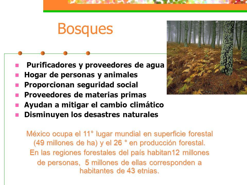 Bosques Purificadores y proveedores de agua