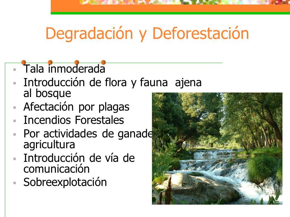 Degradación y Deforestación