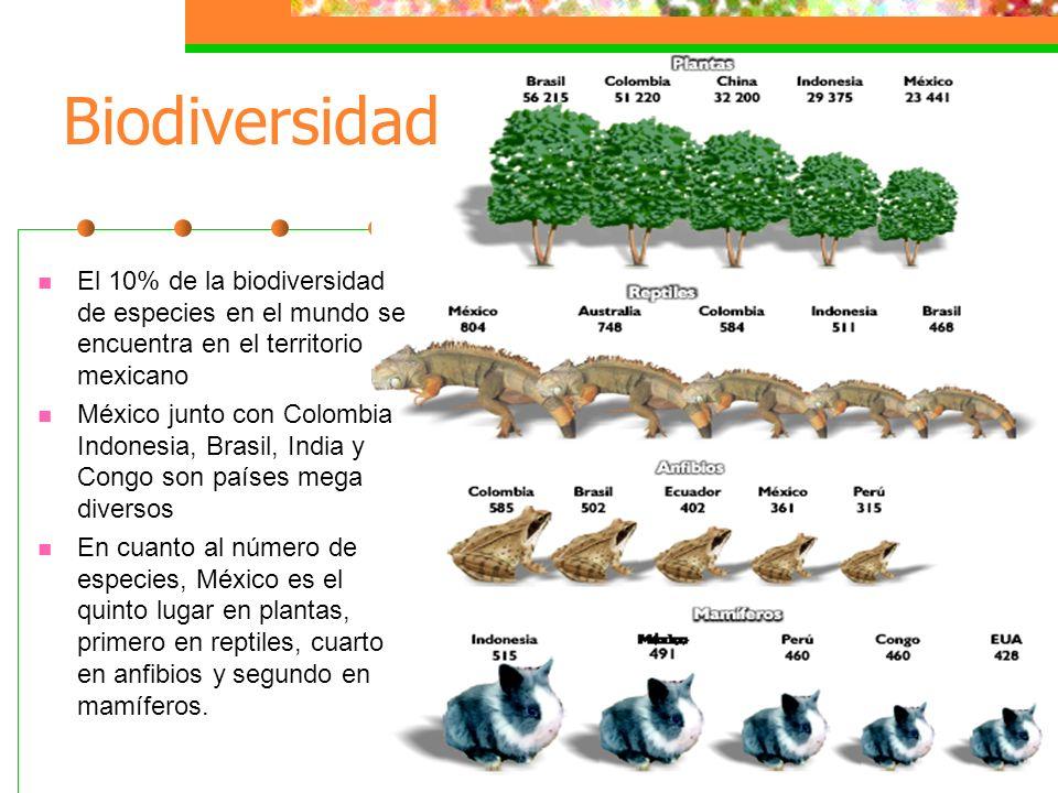 Biodiversidad El 10% de la biodiversidad de especies en el mundo se encuentra en el territorio mexicano.