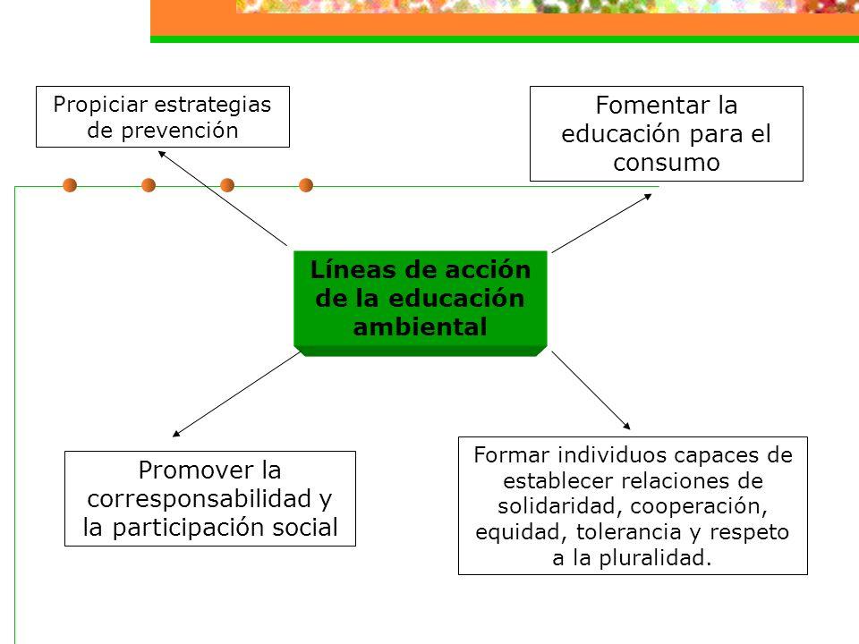 Líneas de acción de la educación ambiental