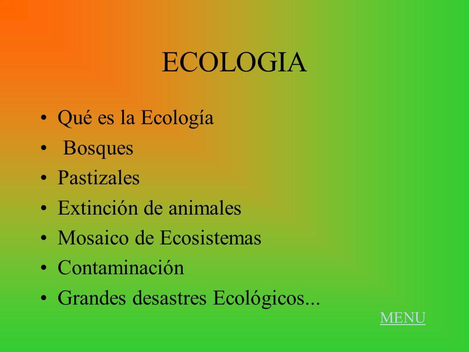 ECOLOGIA Qué es la Ecología Bosques Pastizales Extinción de animales