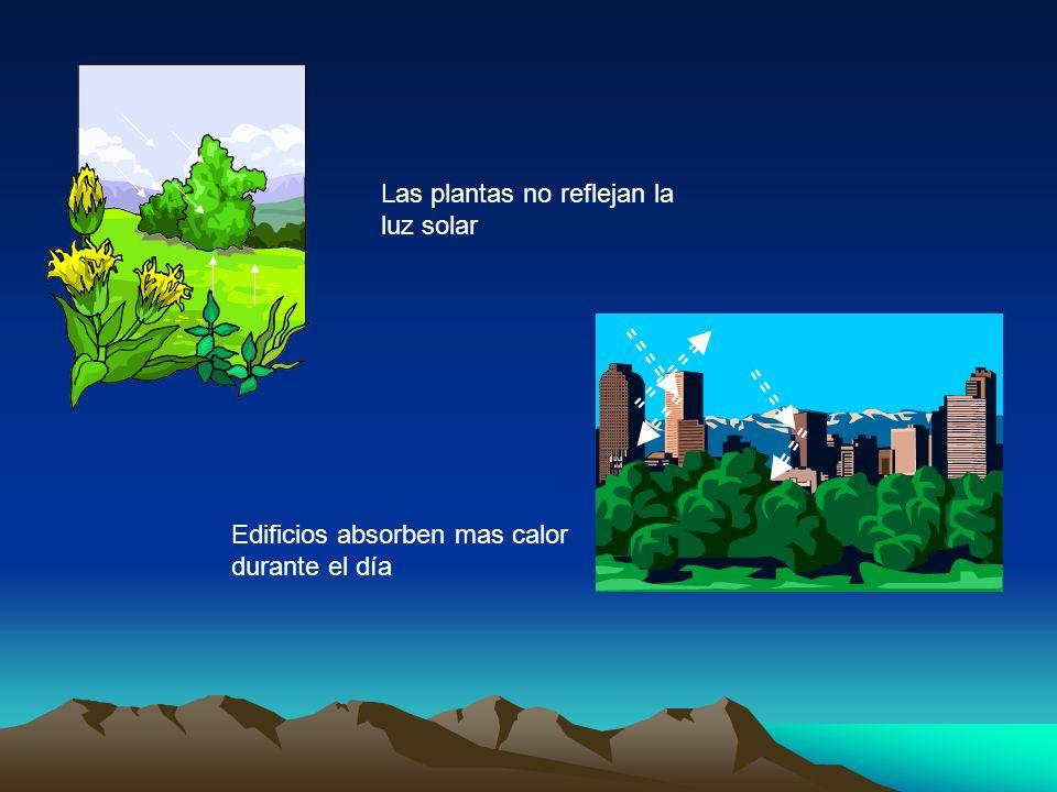 Las plantas no reflejan la luz solar