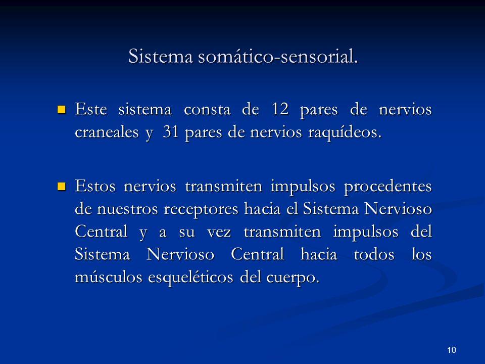 Sistema somático-sensorial.