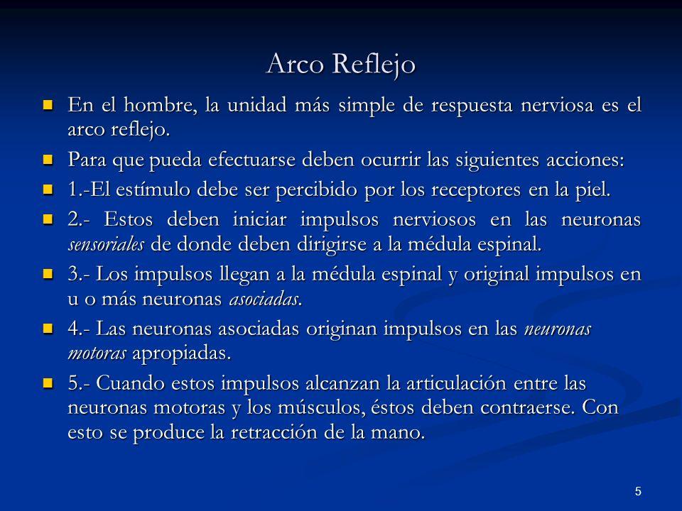 Arco Reflejo En el hombre, la unidad más simple de respuesta nerviosa es el arco reflejo.