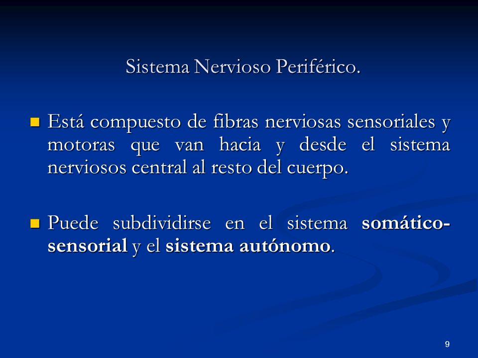 Sistema Nervioso Periférico.