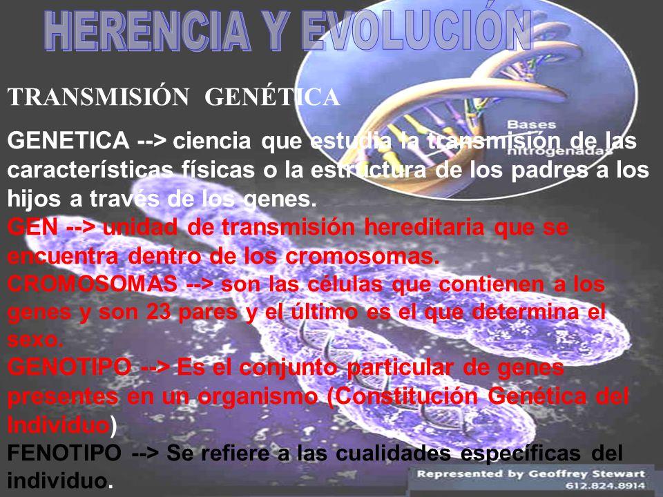 HERENCIA Y EVOLUCIÓN TRANSMISIÓN GENÉTICA