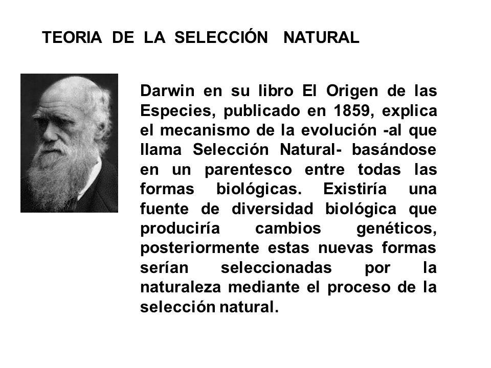 TEORIA DE LA SELECCIÓN NATURAL
