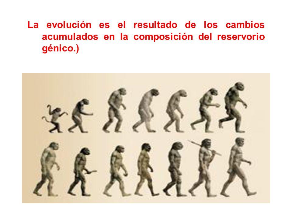 La evolución es el resultado de los cambios acumulados en la composición del reservorio génico.)