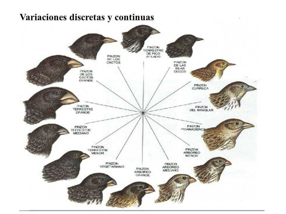 Variaciones discretas y continuas