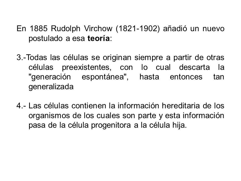 En 1885 Rudolph Virchow (1821-1902) añadió un nuevo postulado a esa teoría: