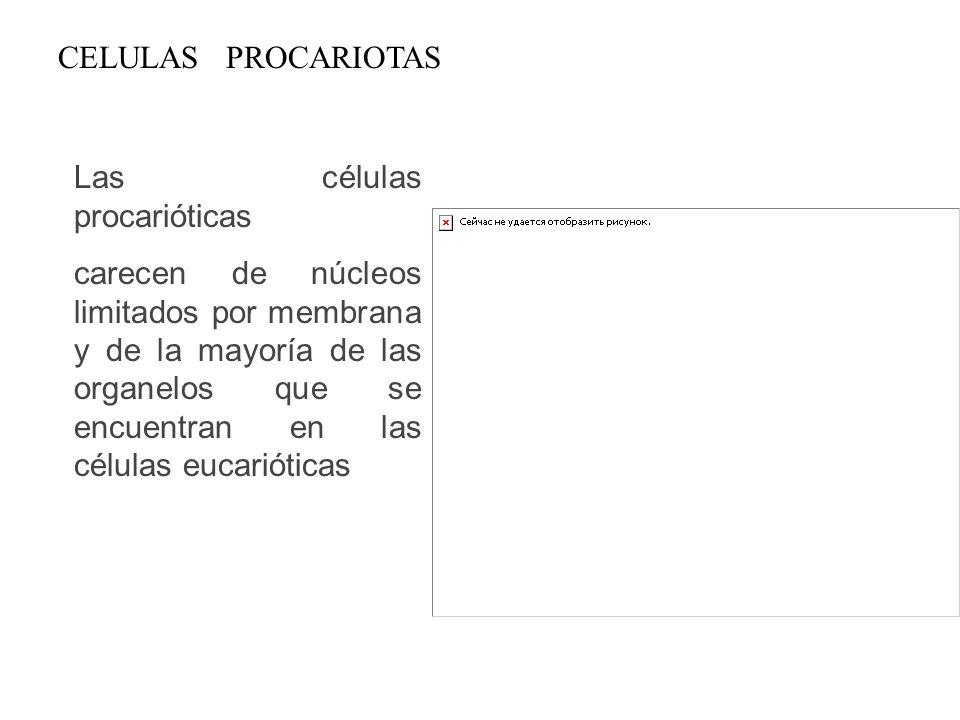 CELULAS PROCARIOTAS Las células procarióticas.