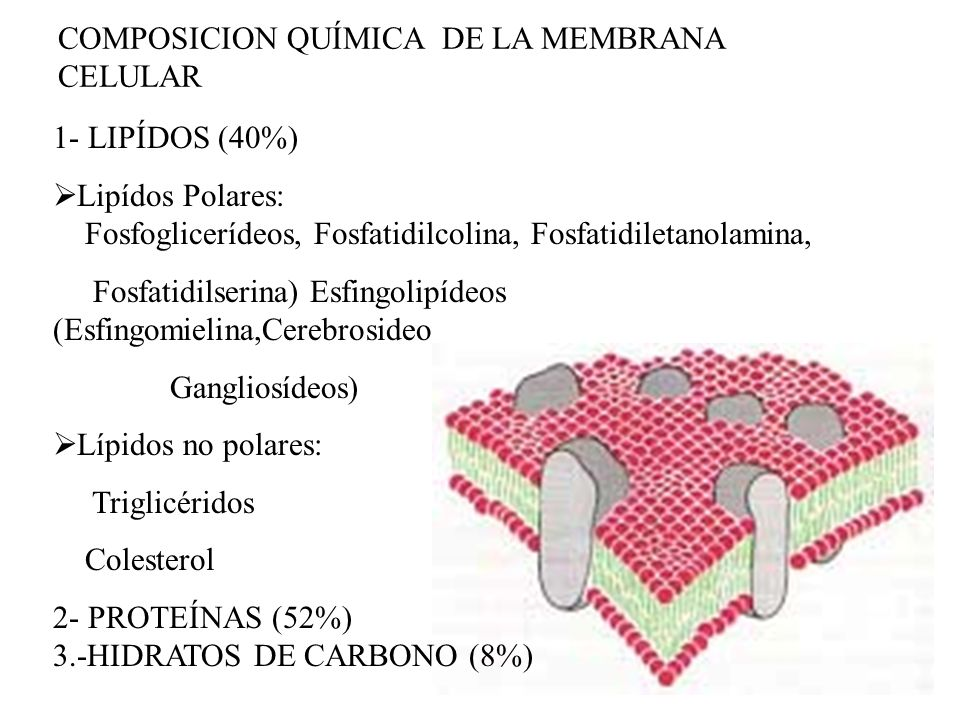 COMPOSICION QUÍMICA DE LA MEMBRANA CELULAR
