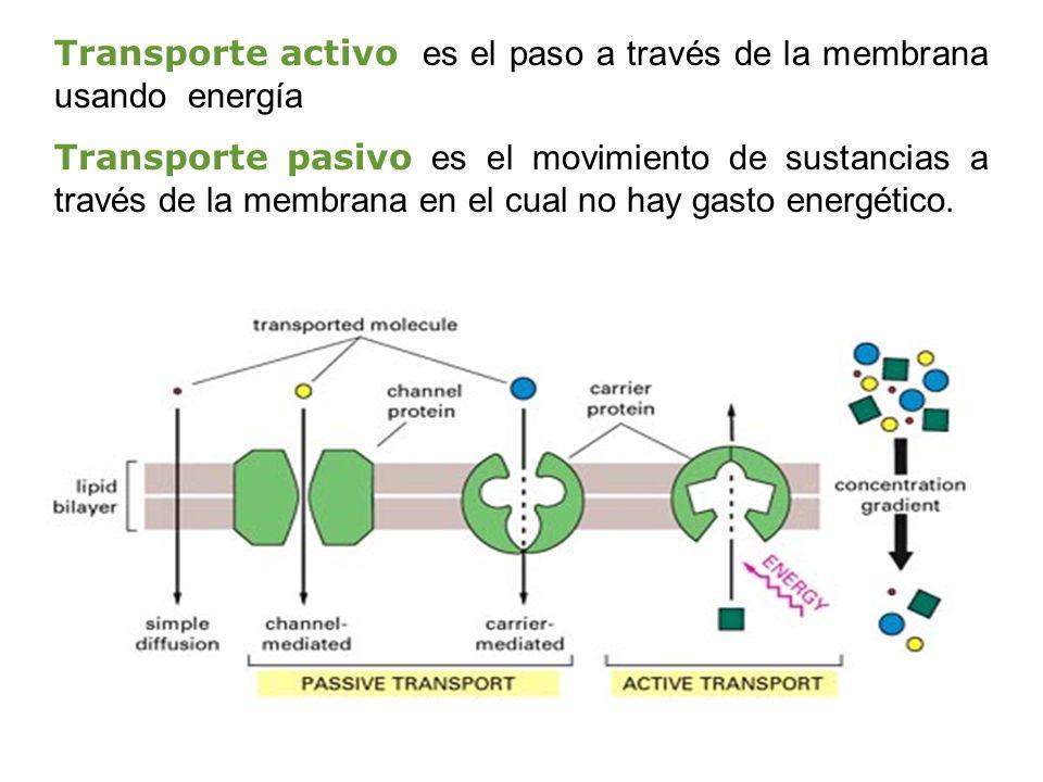 Transporte activo es el paso a través de la membrana usando energía