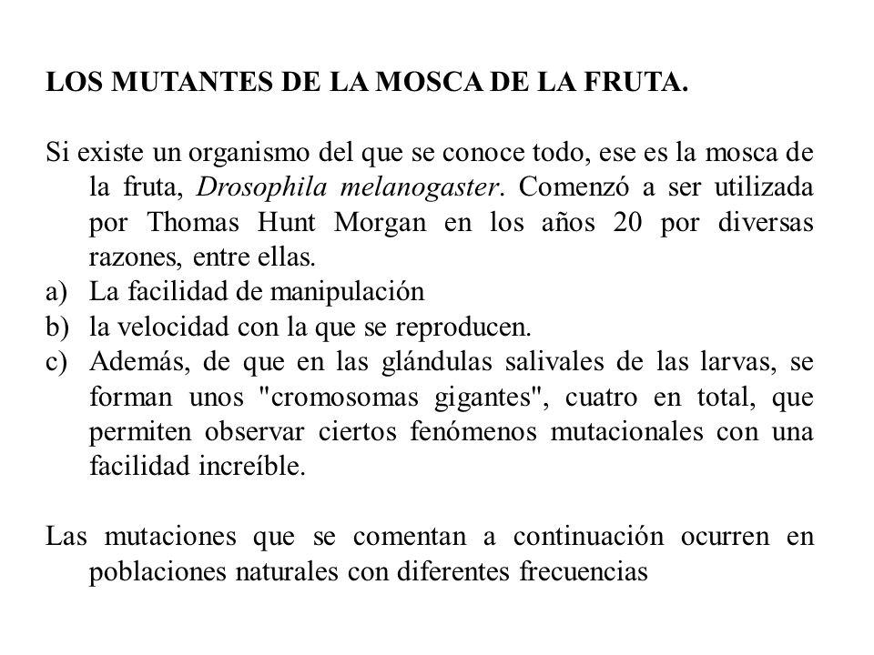 LOS MUTANTES DE LA MOSCA DE LA FRUTA.