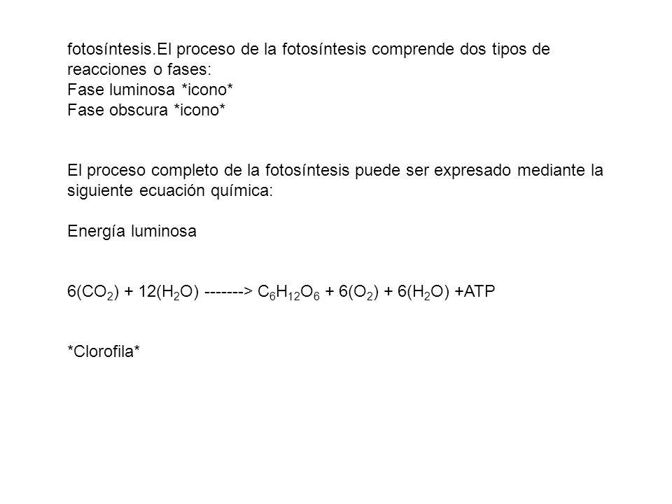fotosíntesis.El proceso de la fotosíntesis comprende dos tipos de reacciones o fases: