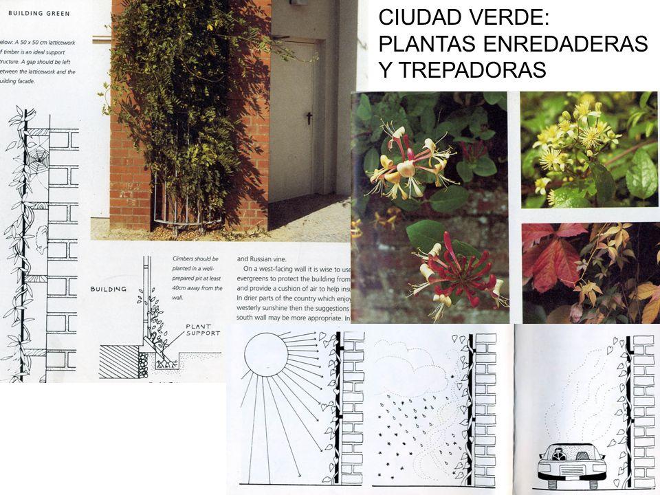 CIUDAD VERDE: PLANTAS ENREDADERAS Y TREPADORAS