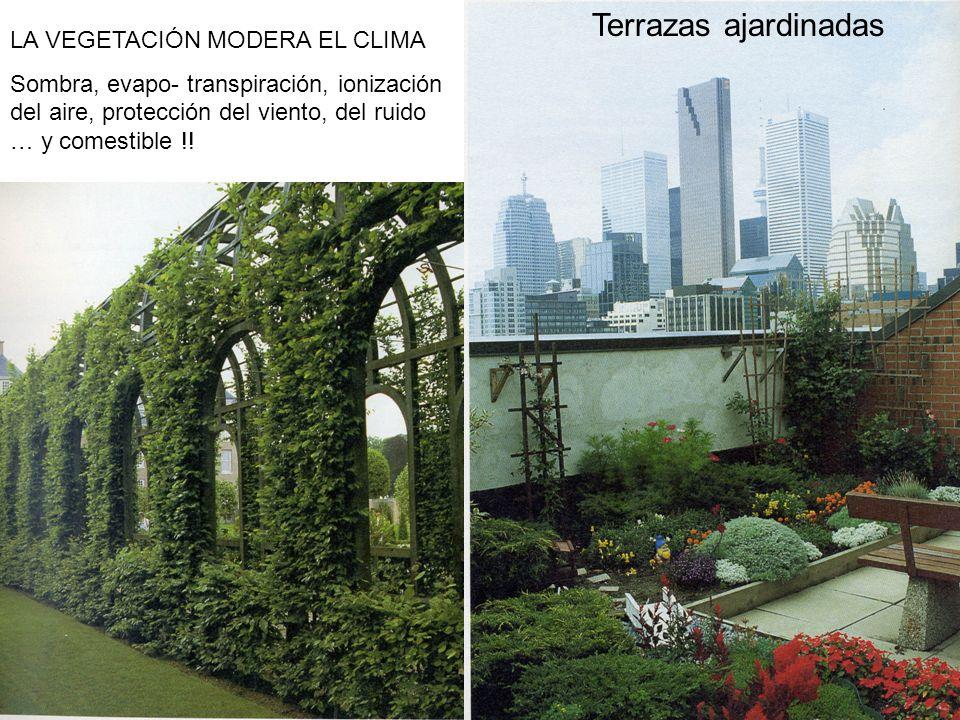 Terrazas ajardinadas LA VEGETACIÓN MODERA EL CLIMA