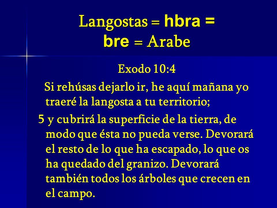 Langostas = hbra = bre = Arabe