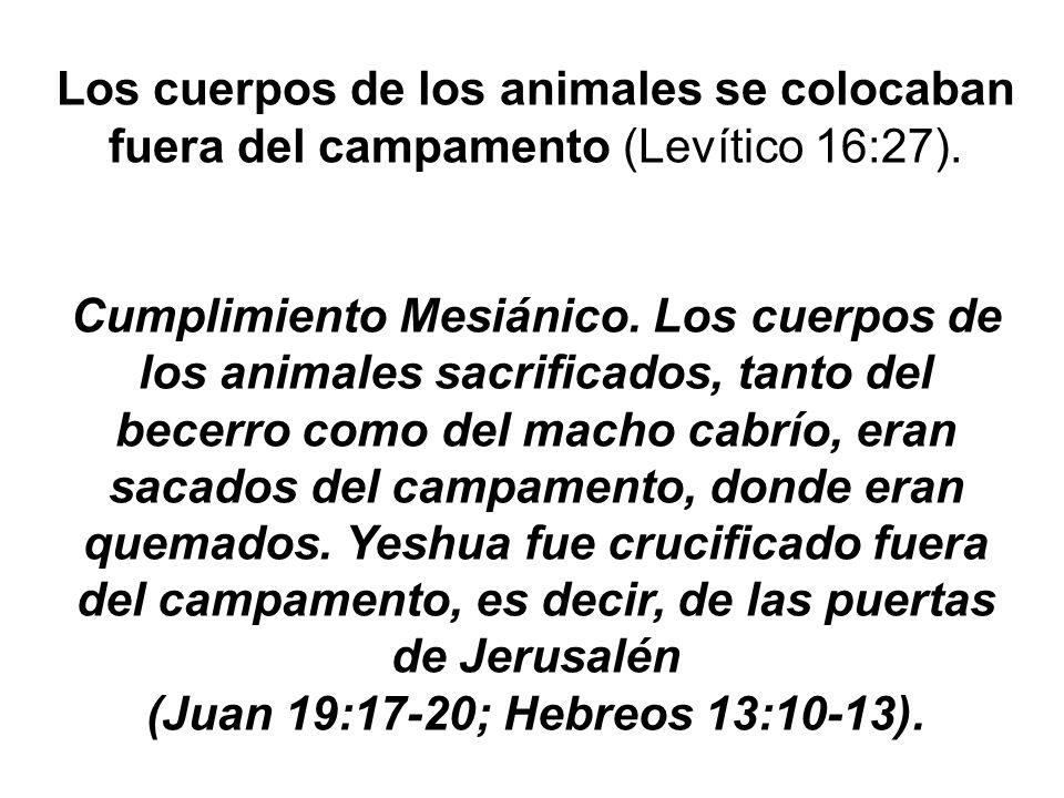 Los cuerpos de los animales se colocaban fuera del campamento (Levítico 16:27).