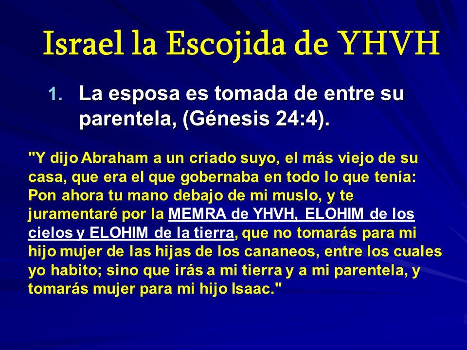 Israel la Escojida de YHVH