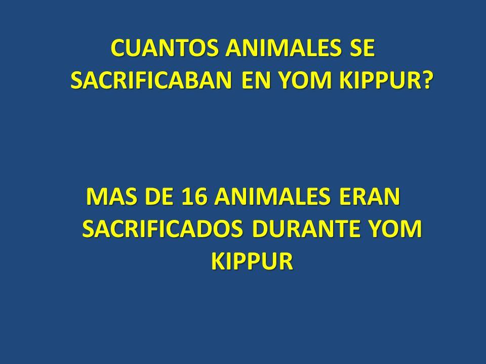 CUANTOS ANIMALES SE SACRIFICABAN EN YOM KIPPUR