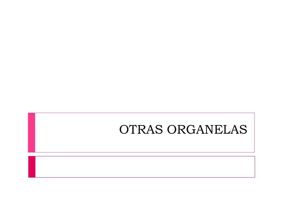 OTRAS ORGANELAS