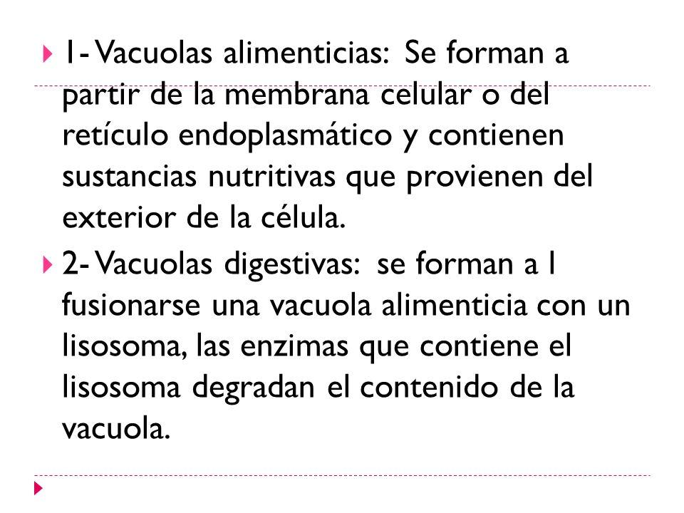 1- Vacuolas alimenticias: Se forman a partir de la membrana celular o del retículo endoplasmático y contienen sustancias nutritivas que provienen del exterior de la célula.