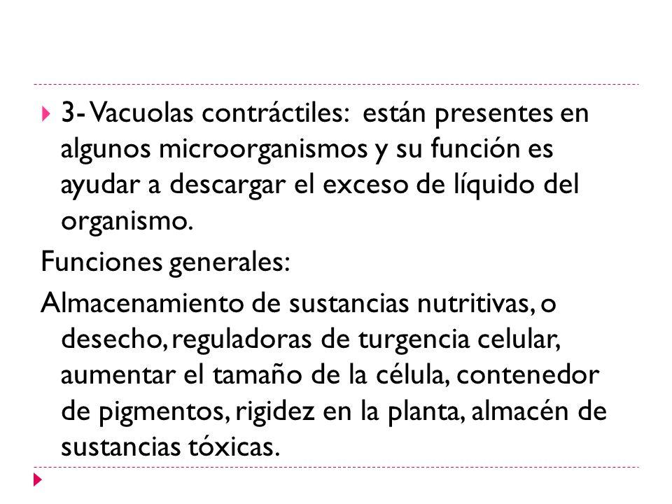 3- Vacuolas contráctiles: están presentes en algunos microorganismos y su función es ayudar a descargar el exceso de líquido del organismo.