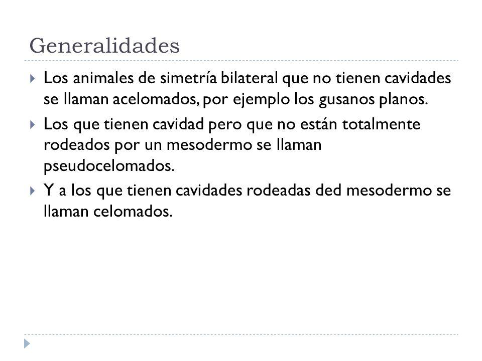 GeneralidadesLos animales de simetría bilateral que no tienen cavidades se llaman acelomados, por ejemplo los gusanos planos.