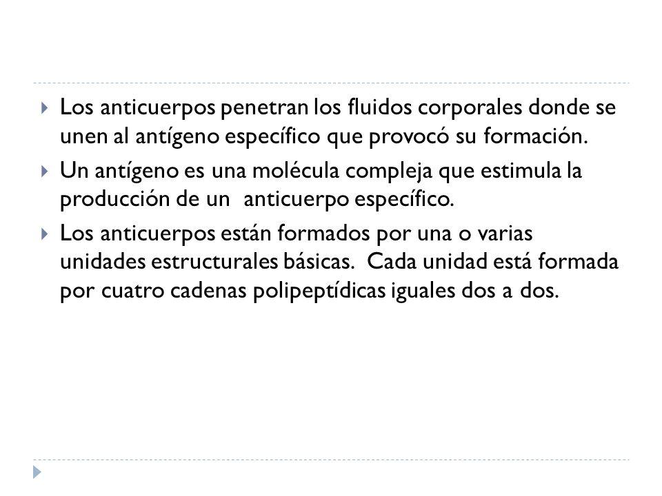 Los anticuerpos penetran los fluidos corporales donde se unen al antígeno específico que provocó su formación.