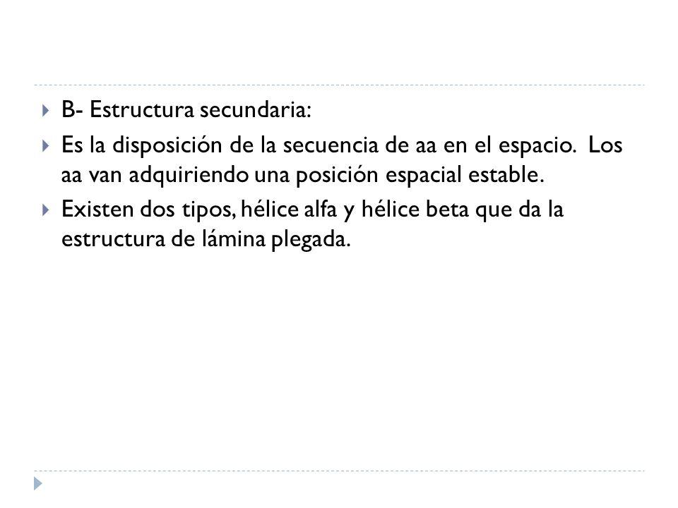 B- Estructura secundaria: