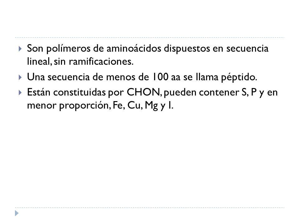 Son polímeros de aminoácidos dispuestos en secuencia lineal, sin ramificaciones.
