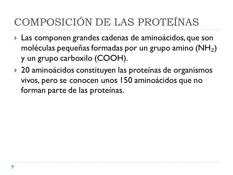 COMPOSICIÓN DE LAS PROTEÍNAS