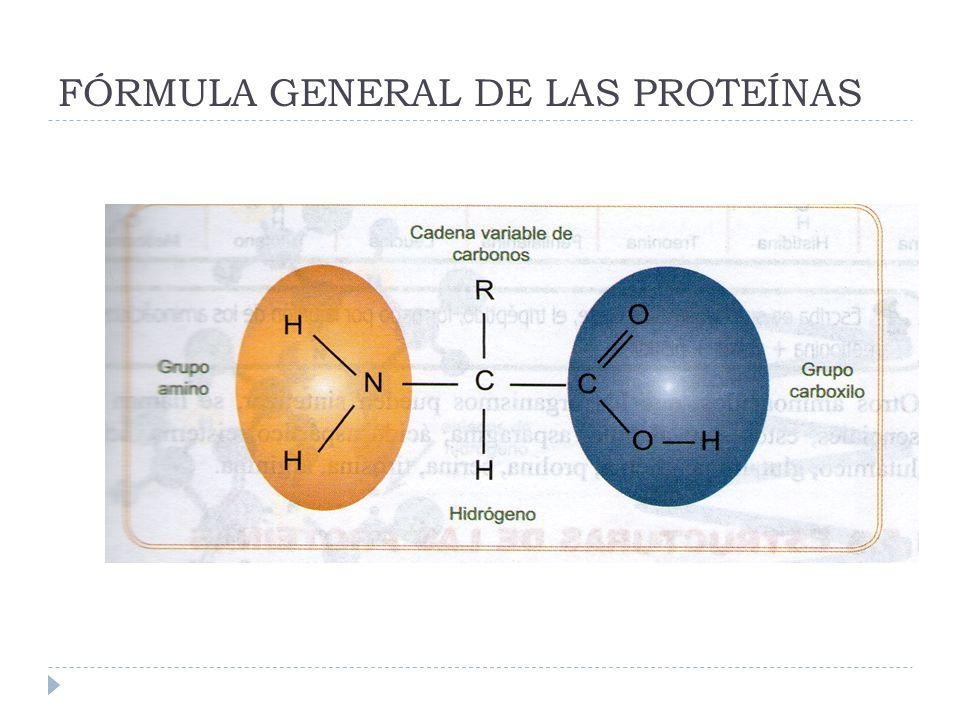 FÓRMULA GENERAL DE LAS PROTEÍNAS