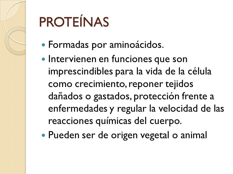 PROTEÍNAS Formadas por aminoácidos.